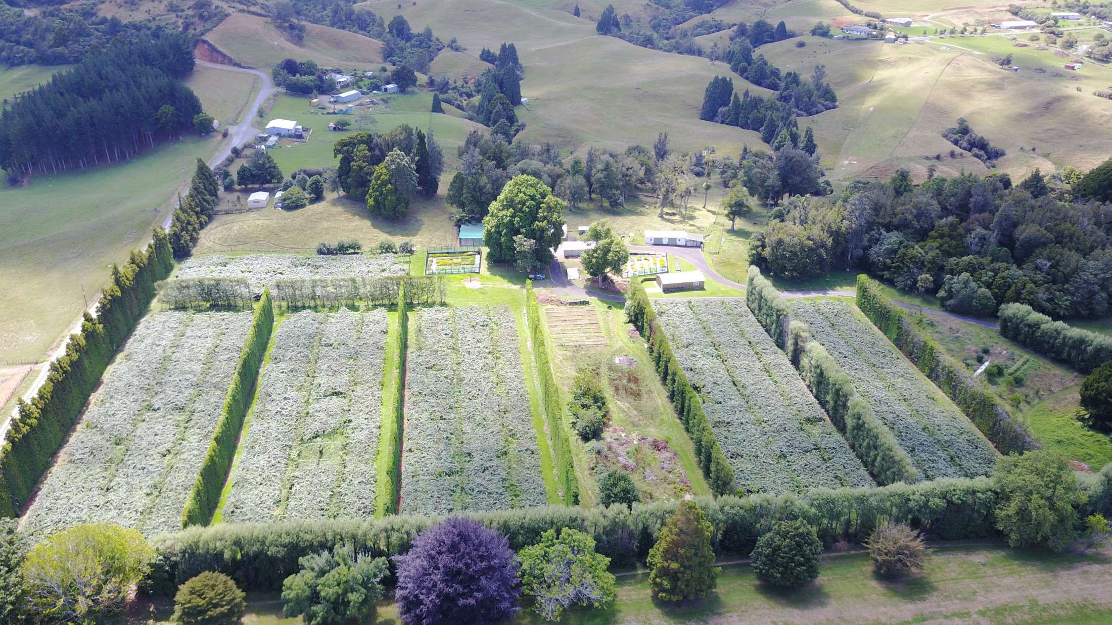 Aerial View Of School Orchard